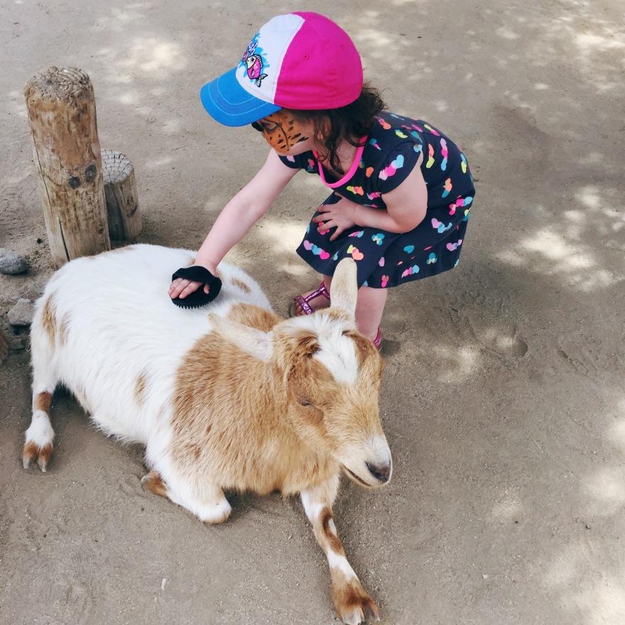 Petting Zoo at Living Desert Zoo