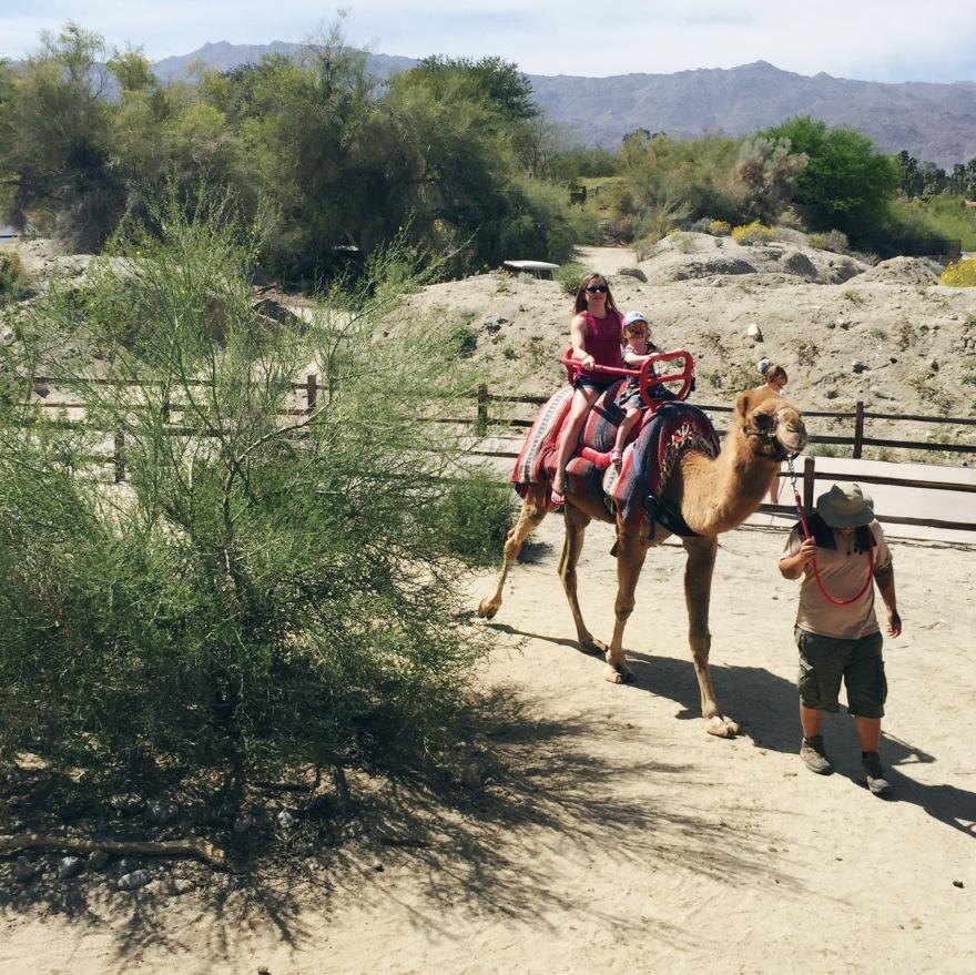 Camal Rides at Living Desert Zoo